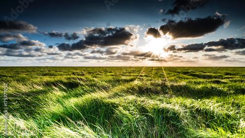 Deurstickers Noordzee Salzwiesen in der Abendsonne