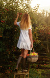 Beautiful young woman picking ripe organic apples - 175988236