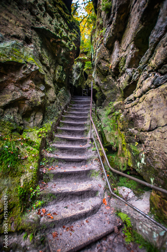 Foto op Canvas Weg in bos Saxon Switzerland Stairs