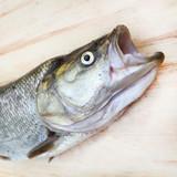 Head of The Asp fish - Aspius Aspius. Fishing catch of predatory fish. - 175989687