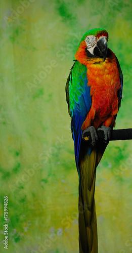 Aluminium Papegaai Pretty Parrot