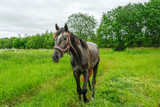 graceful black horse in the field - 175995624