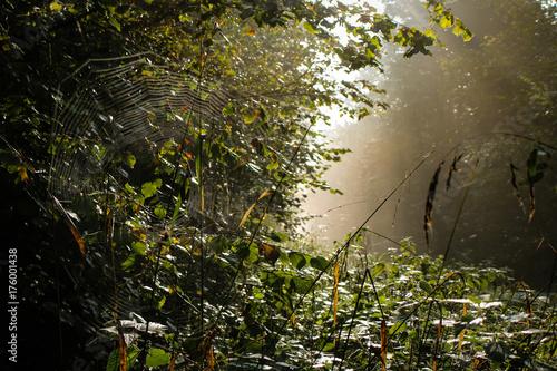 Fotobehang Natuur Sträucher im Morgenlicht im Wald am Wegesrand