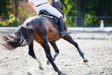 Bay horse with rider galloping on show jumping competition. Equestrian sport background - 176004010