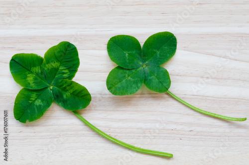 Four-leaf clover Poster