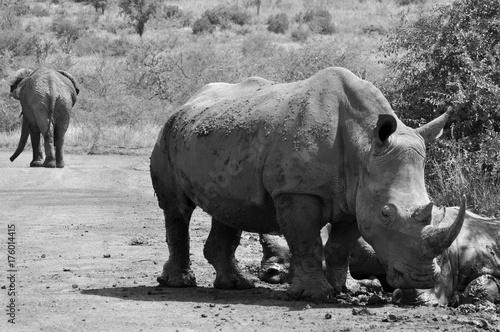 Aluminium Neushoorn white rhinoceros
