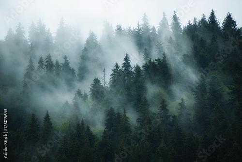 nebelhafte-landschaft-mit-tannenwald-im-hippie-weinlese-retrostil
