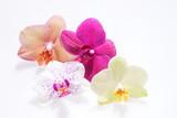 Fototapety Verschiedene Orchideenblüten