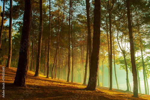 Aluminium Thailand beautiful sun light in pine forest of pang ung maehong sorn most popular winter traveling destination in northern of thailand