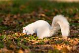 White Squirrel - 176037494