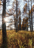 Autumn forest and grass in sunny day - 176052016