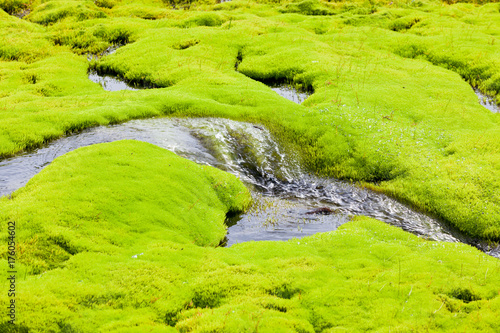 Keuken foto achterwand Lime groen Iceland Small River Stream with green moss