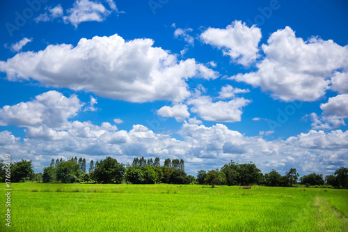 Fotobehang Zomer Green meadows in Thailand