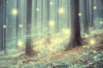 Lovely magic colored blurred foggy forest trees with illustrated abstract bokeh light. © robsonphoto