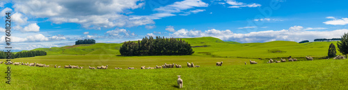 Aluminium Fyle Sheep in the New Zealand