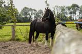 Horse 7 - 176082625