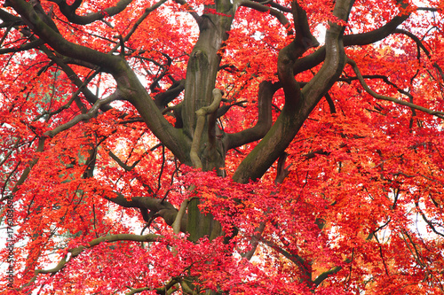 Papiers peints Brique color tree in autumn