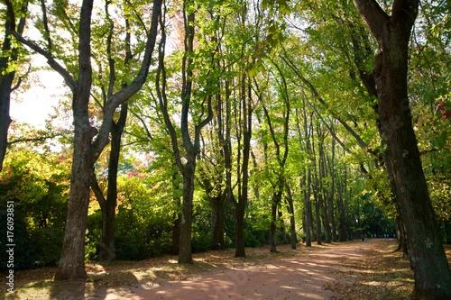Keuken foto achterwand Weg in bos Percurso pelas árvores no jardim de Serralves, floresta