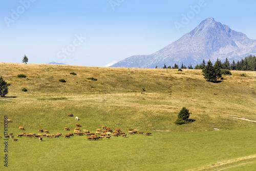 Fotobehang Pistache summer pastures under Krivan hill, High Tatras, Slovakia