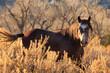 A horse trots through Theodore Roosevelt National Park, North Dakota - 176101067
