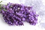 Lavender. - 176101633