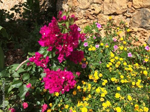 Fotobehang Azalea Flowers Cyprus