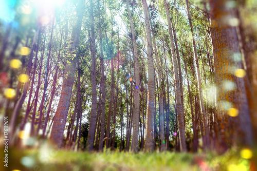 Fotobehang Natuur Fondo abstracto de bosque y hierba verde. Arboles y luz del sol.Naturaleza abstracta