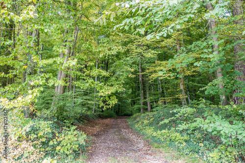 Foto op Canvas Pistache Waldweg