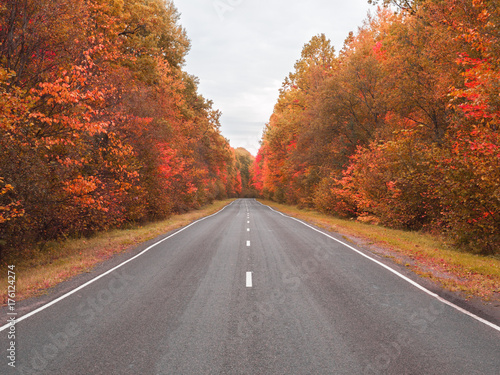 Poster Diepbruine autumn road . beautiful bright autumn road landscape. red leaves on the trees