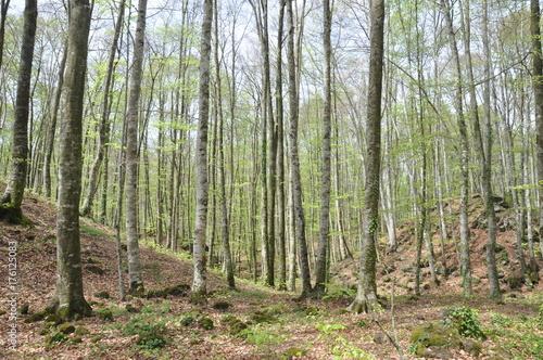 Spoed canvasdoek 2cm dik Olijf bosque