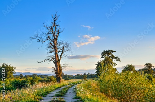 Fotobehang Zomer Beautiful summer landscape. Road and lonely tree with colored sky in the background.