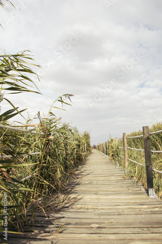 Fotobehang Bruggen wooden bridge reeds nature view. Wooden path through and over a lot of green reed.