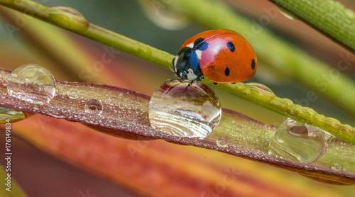 Marienkäfer auf pflanze