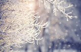 Branches in hoarfrost and snow in the winter - 176161617