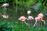 Flamingos - 176165215