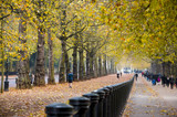 Autumn perspective trees in Hyde Park at Constitution Hill road from Buchingham palace towar Wellington Arch