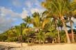 Plage de sable avec palmier et cocotier sur l'île Maurice