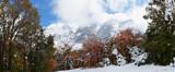 Cascade Mountain Utah Autumn Forest 01 - 176182472