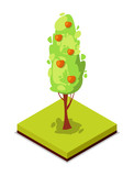 Green apple tree isometric 3D icon. Public park decorative plant and green grass vector illustration. Nature map element for summer parkland landscape design. - 176183600