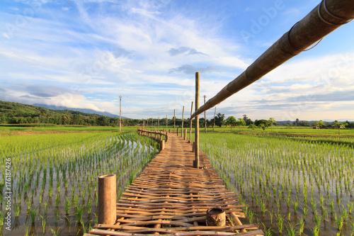 Aluminium Thailand The wooden bridge over the rice field