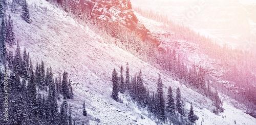 Fotobehang Lichtroze Snowy pine trees on alp mountain slope