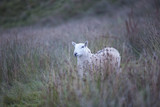 Welsh nature and wildlife  - 176196075