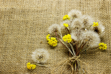 bouquet of dandelions on sacking.