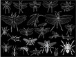 twenty four insects sketches on black