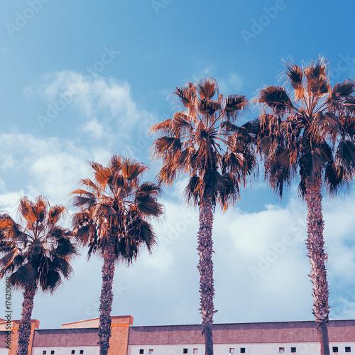 Tropical fashion minimal. Palm and Urban location. Art Color Design - 176210660