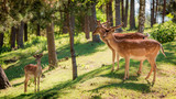 Wonderful deers in forest at dawn, Europe - 176214299