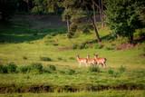 Beautiful deers in forest in summer, Europe - 176215454