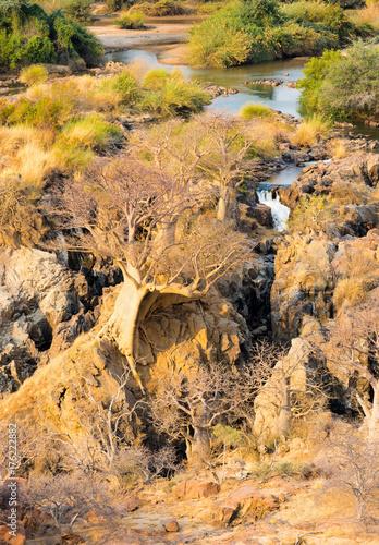 Poster Baobab Epupa Wasserfälle, Kunene, Namibia