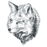 Fox sketch vector graphics head monochrome black-and-white drawing - 176228093