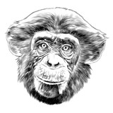 monkey head sketch vector graphics black and white monochrome pattern - 176231007